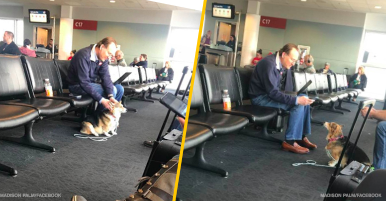 Adorable Dog Comforts Upset Man At Airport, And Then They Find Out The Man Just Lost His Dog