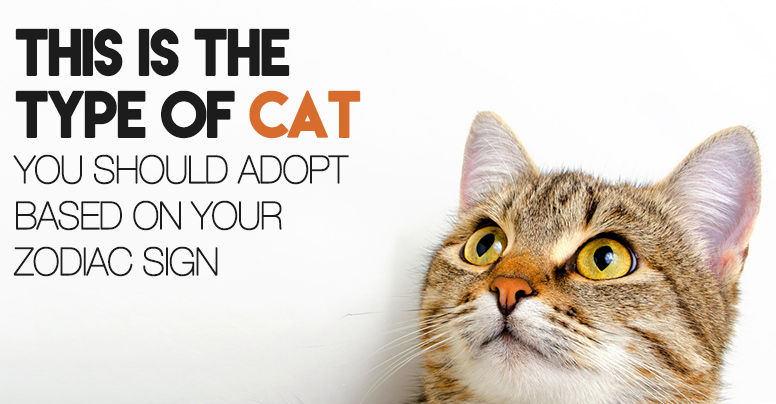 Here Is The Type Of Cat You Should Adopt According To Your Zodiac Sign