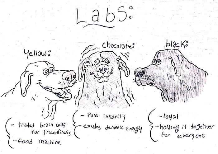 This image has an empty alt attribute; its file name is dog-breeds-traits-guide-cartoons-grace-gogarty-11-5a8a7c82482a3__700.jpg