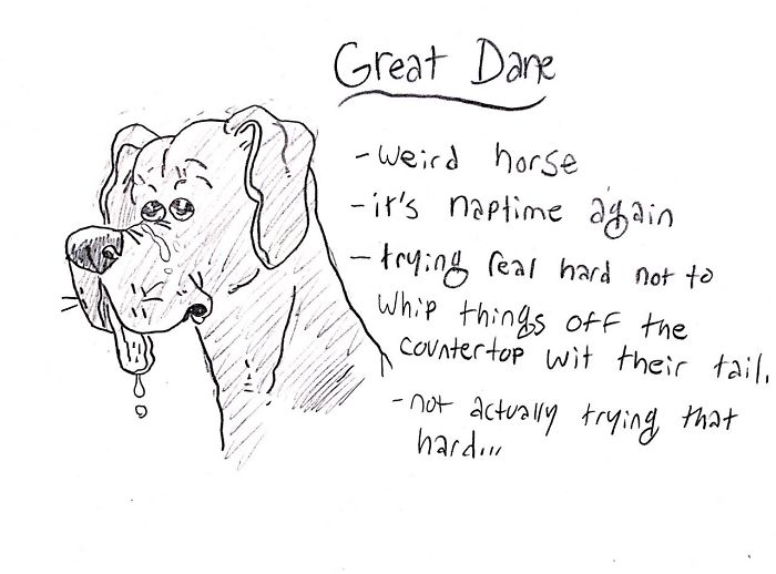 This image has an empty alt attribute; its file name is dog-breeds-traits-guide-cartoons-grace-gogarty-16-5a8a7c8d4f03f__700.jpg