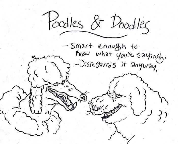 This image has an empty alt attribute; its file name is dog-breeds-traits-guide-cartoons-grace-gogarty-20-5a8a7c9525ae7__700.jpg